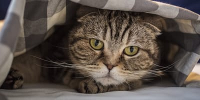 Stres u kota – objawy i skutki