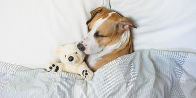 Ile śpi pies? Jak zapewnić psu zdrowy sen?