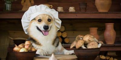 dieta cetogenica perros