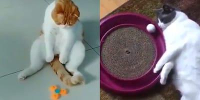 Tak zblazowanych kotów jeszcze nie widzieliście (VIDEO)