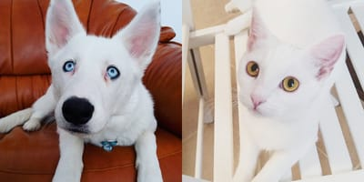 perro blanco y gata