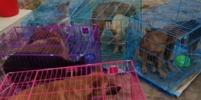 cani-nelle-gabbie