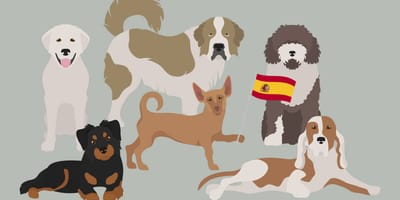 Karikaturen spanischer Hunderassen