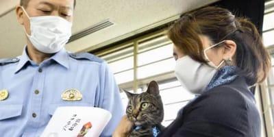 gatto con autorità giapponese