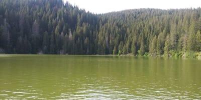 lago e foresta