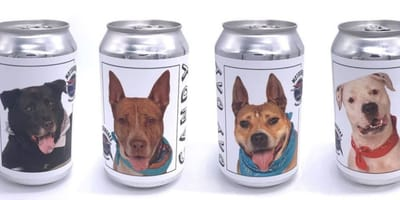 Beer cans with dog photos on them