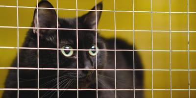 Schwarze Katze hinter einem Gitter