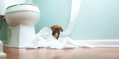 <p>Shutterstock<span>&copy;</span></p>  <p><span>dodac:&nbsp;</span>Pies nie odstępuje psy są zwierzętami pies kocha psy są zwierzętami stadnymi</p>