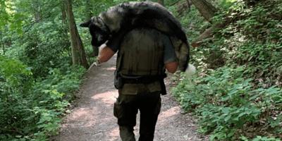 Su perro sufre un golpe de calor mientras camina, entra en pánico y aparece una sombra al final del sendero
