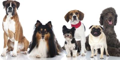 Jaka rasa psa pasuje do Twojego znaku zodiaku?