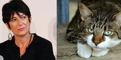 Ghislaine Maxwell and cat montage