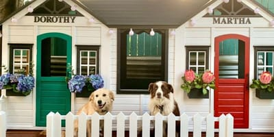 Two cubby houses decorated for dogs with dogs sat in front of the houses