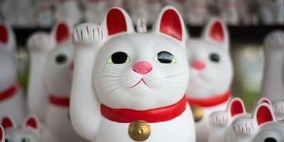 Maneki-neko – skąd się wziął japoński kot szczęścia?