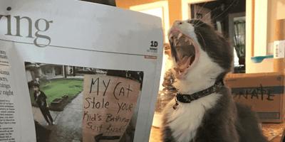 gatto sbadiglia accanto al giornale