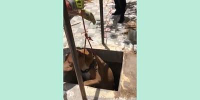 restacan a perro de pozo en zacatecas