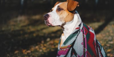 perro con cobija