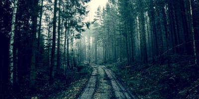 horror-w-lesie