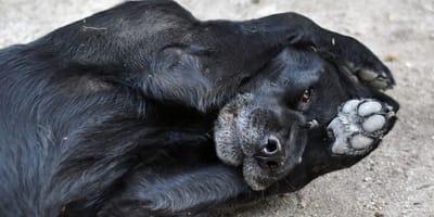 cane con zampe in vista