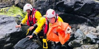 Dog rescued from rocks