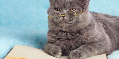 Cómo educar a un gato: tips para tener un minino bien portado