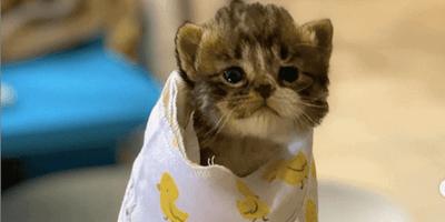 Un gattino orfano e i suoi fratelli trovano una mamma davvero speciale