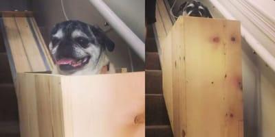 Doggy lift