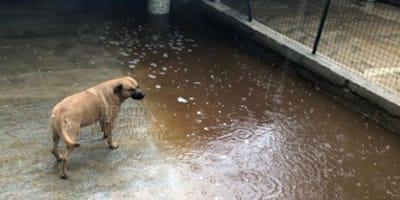 cane-sotto-la-pioggia