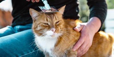 Czesanie kota – jak sprawić, aby kot je polubił?