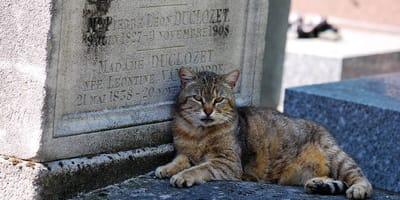 gatos rescatados de un cementerio