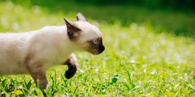 Freigänger-Katze unterwegs
