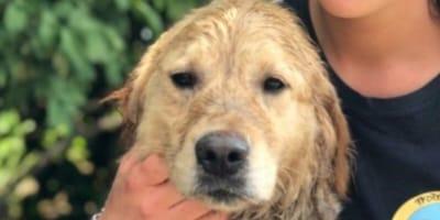 Einer der Hunde mit einer Tierpflegerin