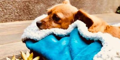 cagnolino avvolto in una coperta