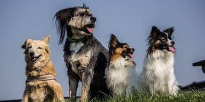 A group of dogs in the open air