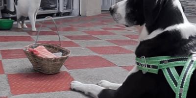 Un perro va al mercado en Colombia