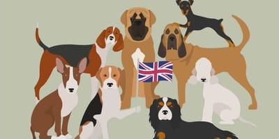 Karikaturen englischer Hunderassen