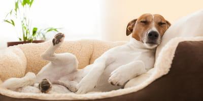 Wenn der Sandmann kommt: Davon träumen unsere Hunde
