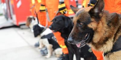psy pracujące w służbach