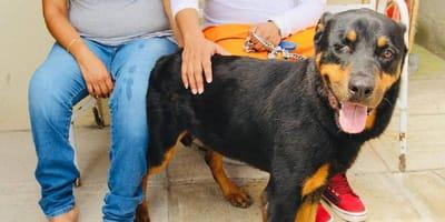 perro sobrevive a incendio y es adoptado