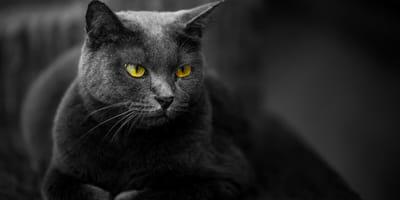 ¿Es cierto que los gatos pueden ver en la oscuridad?