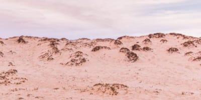Schäferhund in den Dünen verschwunden: Nur Menschen mit Adleraugen finden ihn!