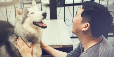 <p>Coraz częściej udaje się ratować psy z transport&oacute;w i zniechęcać ludzi do konsumpcji psiego mięsa (&copy; Fredrik &Ouml;hlander on Unsplash)</p>