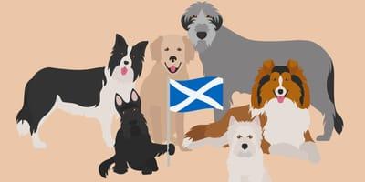 Karikaturen schottischer Hunderassen
