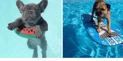 Las fotos de postureo que tienes que hacer con tu perro este verano