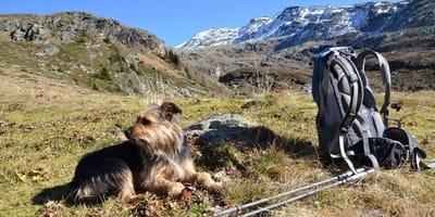 cane con zaino da trekking in montagna