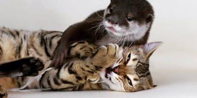 kot-i-wydra