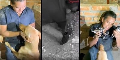 perritos atrapados en un hoyo