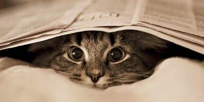gato escondido bajo periodico