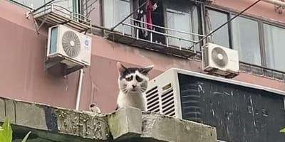 Smutny kot siedzi na dachu