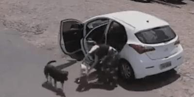 mujer abandona perro