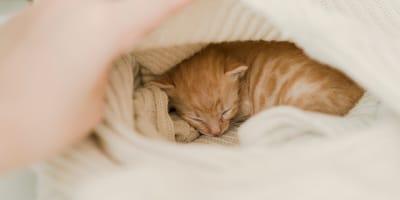 Ten kociak, który ssie kciuk jak noworodek, to najsłodsze co dziś zobaczycie (VIDEO)